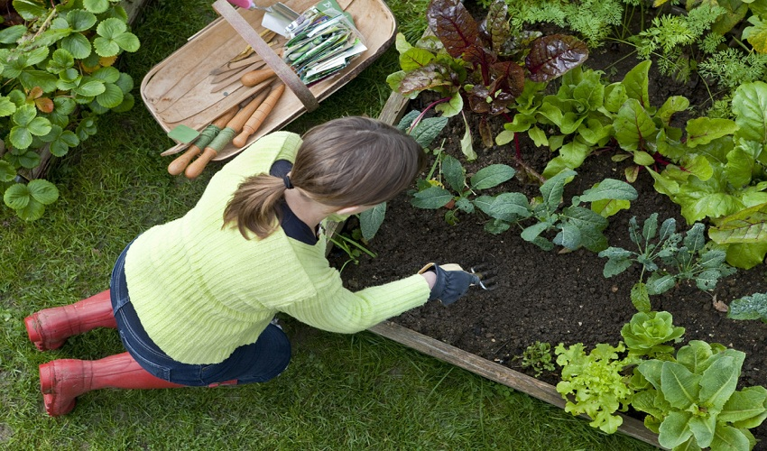 5 Beginner's Tips for Gardening