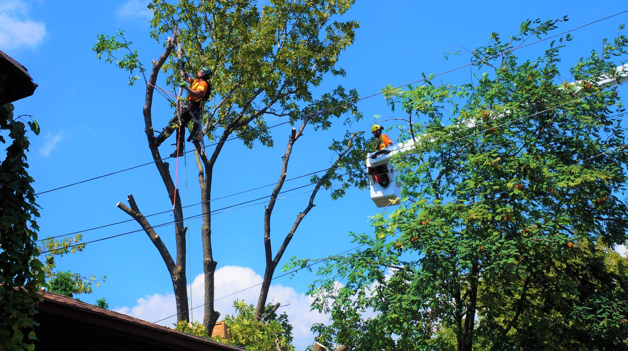 tree-removal-mississauga